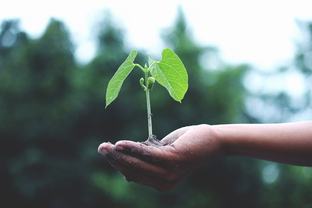 negative-space-plant-grow-hand-akil-mazumder