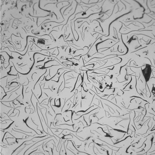 gray_iron_microstructure
